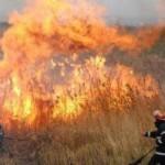 incendiu-vegetatie-uscata1